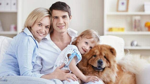 Wills & Trusts dog-young-family Direct Wills Ravenscliffe